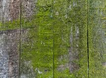 Wooden fence with green moss royalty free stock image