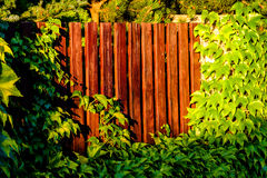Wooden fence in green Royalty Free Stock Photography