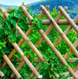 Wooden fence. And green plants royalty free stock photography