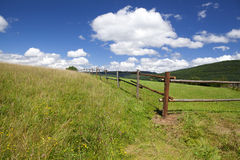 Wooden fence on green summer pastoral Royalty Free Stock Photo