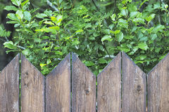 Wooden fence with green trees at the background Stock Photography