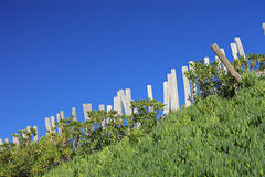 Wooden fence and greenery Royalty Free Stock Photo
