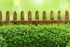 Wooden fence and hedge Royalty Free Stock Photo
