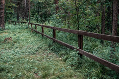 Wooden fence in lush greenery in the national Park. Stock Photo