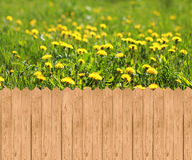 Wooden fence  and meadow with dandelions Royalty Free Stock Photo