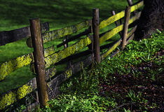 Wooden fence with moss and lichens on a pasture in the countrysi. De, selected focus, very narrow depth of field Stock Photo