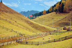 Wooden fence near the forest. Wooden fence bounding land properties on sunny hill near alpine forest in autumn time Royalty Free Stock Photos