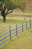 Wooden fence near forest Stock Photo