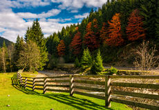 Wooden fence near forest river in autumn mountains. Few red foliage trees among spruce forest on hill Royalty Free Stock Images
