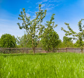 Wooden fence on nice green meadow Royalty Free Stock Image