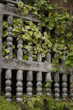 Wooden fence. Old wooden fence with plants in a garden Stock Photos