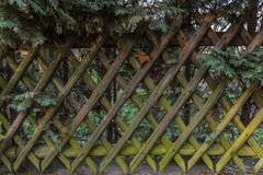 Wooden Fence. Old rustic striped fence under coniferous tree Royalty Free Stock Photos