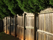 Wooden fence with overhanging trees Stock Photos
