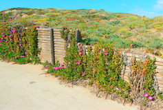 Wooden fence and pink flowers Royalty Free Stock Photography