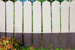 Wooden fence with plant. White and brown wooden fence with plant Stock Images