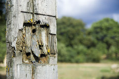 Wooden fence post Stock Images