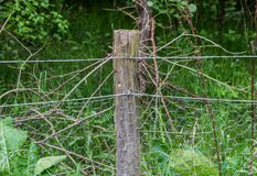 Fence Post With Chicken Wire. A wooden fence post holding up chicken wire with a forest in the background stock photography