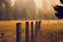 Wooden fence posts in pasture Stock Photography