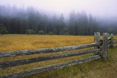 Wooden fence in redwood forest Royalty Free Stock Image