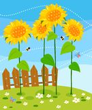 Wooden fence and sunflowers Stock Photos