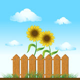 Wooden fence. sunflowers on me Stock Images