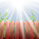 wooden fence and vegetation, the sun's rays.  Stock Photos