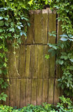 Wooden fence  with vine Stock Photo