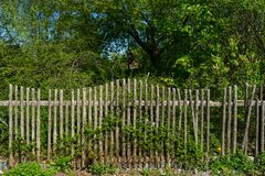 A wooden fence. And an abandoned garden stock image