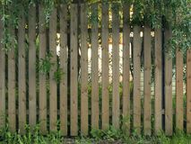 Wooden Fence. Visible vegetation, trees and backyard Royalty Free Stock Photography