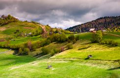 Wooden fences of rural area on grassy hillsides. Lovely rural landscape of mountainous village in springtime Royalty Free Stock Image