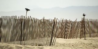 Wooden Fences at Venice Beach Stock Photography
