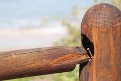 Wooden fencing. Brown Royalty Free Stock Photo