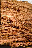 Wooden fibers. An closeup of wooden fibers and tissue royalty free stock photos