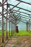 Wooden film greenhouse after harvest Stock Image