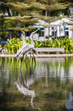 Wooden Flamingos Royalty Free Stock Images