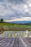 wooden floor and Blured Agriculture terrace rice fields on the m Royalty Free Stock Photography