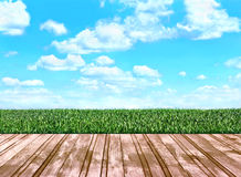 Wooden floor boards that go on the field with grass Royalty Free Stock Photos
