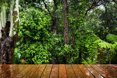 Wooden Floor and Forest Stock Image