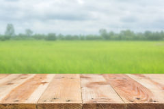 Wooden floor in front of blur color of the rice field Stock Images