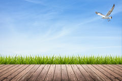 Wooden floor and grass under sky and bird Stock Images