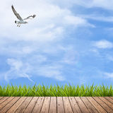 Wooden floor and grass under sky Royalty Free Stock Photo