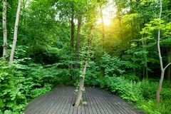 Wooden floor in a green forest. Spa, welness, nature Royalty Free Stock Photo