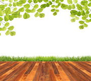 Wooden floor. With green leaves and green grass isolated Royalty Free Stock Photo