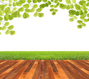 Wooden floor. With green leaves and green grass isolated Stock Photos