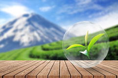 Wooden floor with organic tea leaf in the bubble on blurred beau. Tiful landscape and tea plantation background Royalty Free Stock Photo