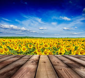 Wooden floor with sunflower field and blue sky Royalty Free Stock Photos