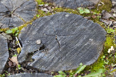 Wooden floor surface. Photographed close-up old wooden surface made of logs and planks for the movement of people. Part of the old building structure Stock Images