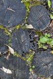 Wooden floor surface Stock Photo