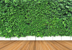 Wooden floor and vertical garden with tropical green leaf Royalty Free Stock Images