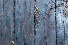 Wooden floorboards Stock Image